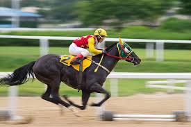 pacuan kuda online2
